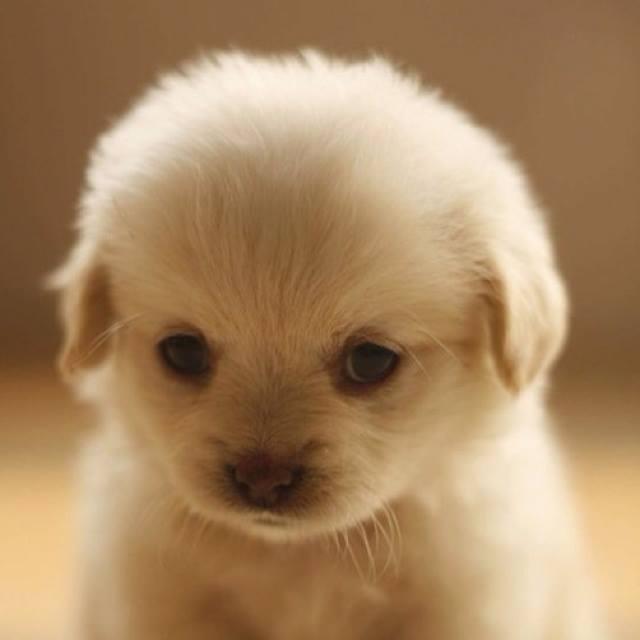 [Image: 30059-Sweet-Little-Puppy.jpg]