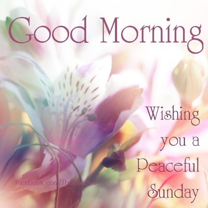 Good Morning And Happy Sunday Love Message : Good morning wishing you a peaceful sunday pictures