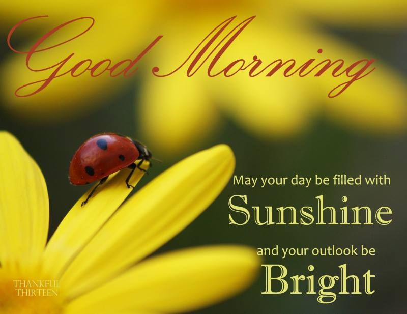 Good Morning Love Bug : Good morning may your day be filled with sunshine and