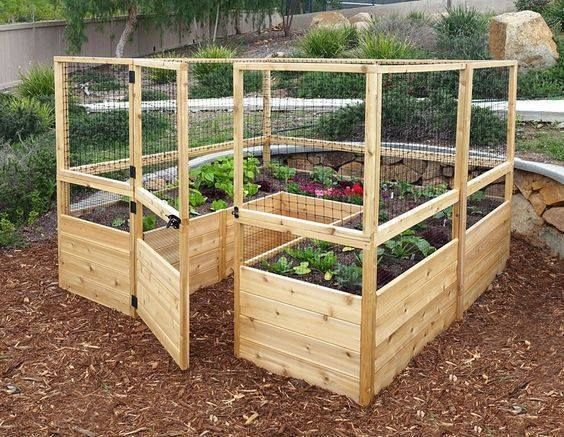 1000 Ideas About Enclosed Bed On Pinterest: Enclosed Vegetable Garden With Raised Beds Pictures