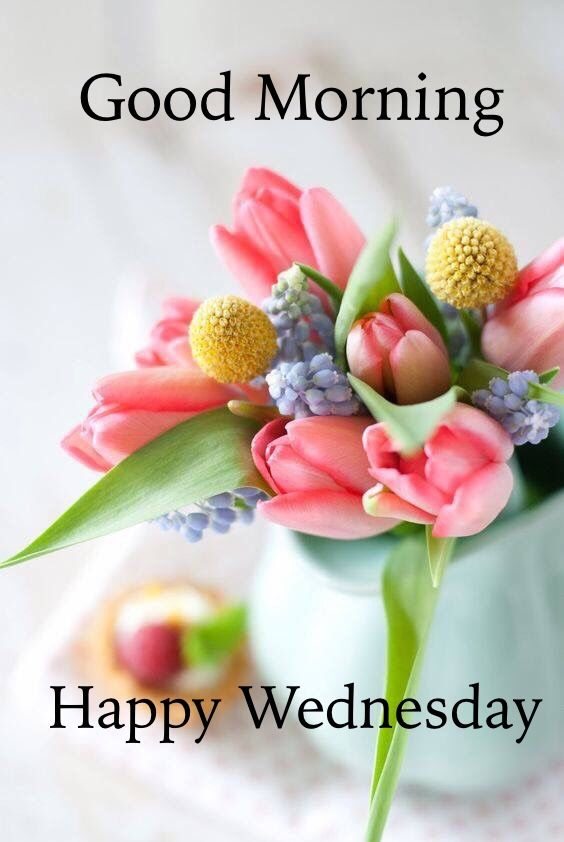 Good Morning Happy Wednesday : Good morning happy wednesday pictures photos and images