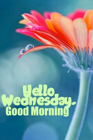 Have A Great Friday Gif Hello Wednesday, Good ...