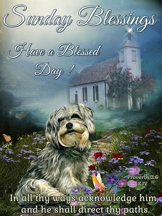 Sunday Blessings Have A Great Day Pictures, Photos, and ...