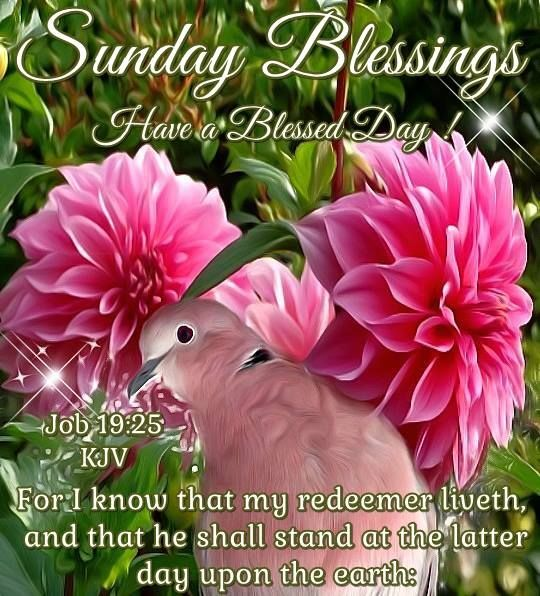 Sunday Blessings Job 19 25 Pictures Photos And Images