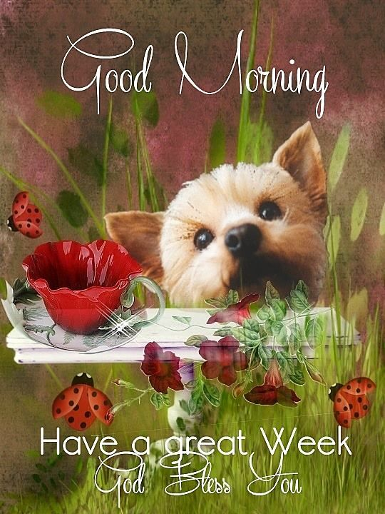 Good Morning Have A Great Week Pictures Photos And