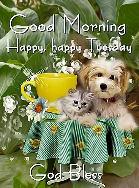 Cat And Dogs Good Morning Meme