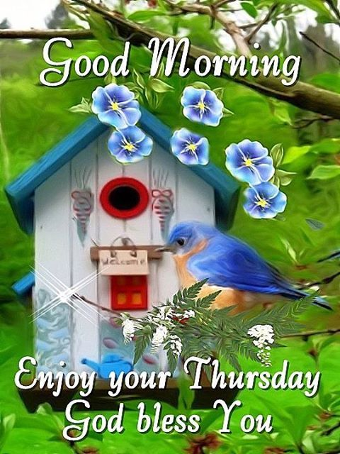 good morning  enjoy your thursday pictures  photos  and images for facebook  tumblr  pinterest