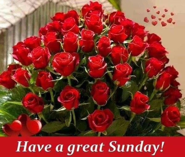 Good Morning Sunday Rose : Have a nice sunday rose imgkid the image kid