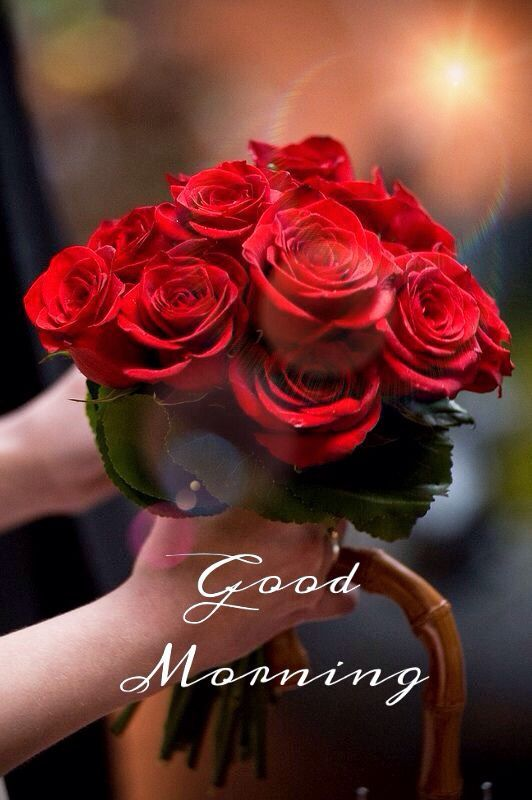 Good Morning - Red Roses Pictures, Photos, and Images for Facebook, Tumblr, Pinterest ...