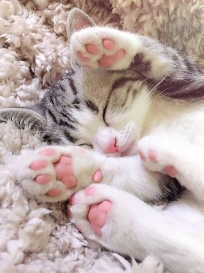 cute kitten with pink paws pictures photos and images for facebook