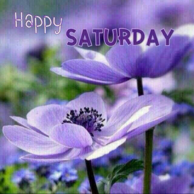 Image result for saturday flowers