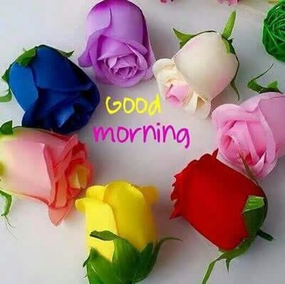 Good morning colorful roses pictures photos and images - Good morning rose image ...