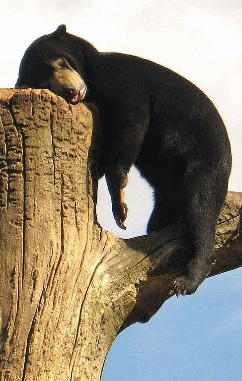 Sleeping Bear Pictures, Photos, and Images for Facebook