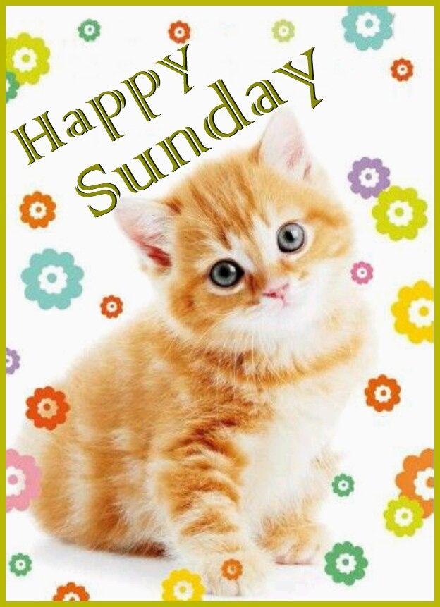 310113-Happy-Sunday.jpg
