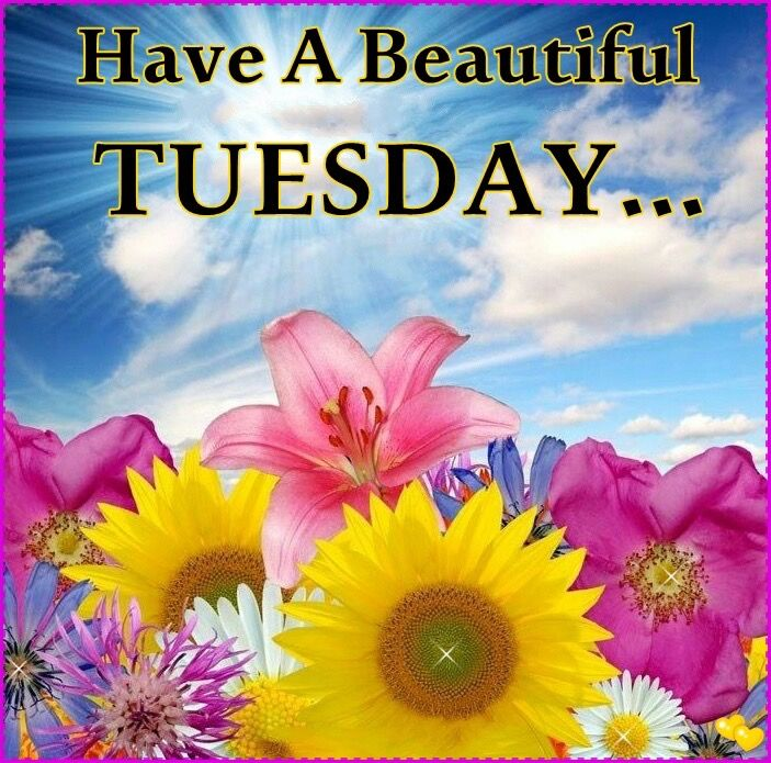 Have A Beautiful Tuesday Pictures Photos And Images