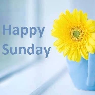 happy sunday sunflower pictures photos and images for facebook