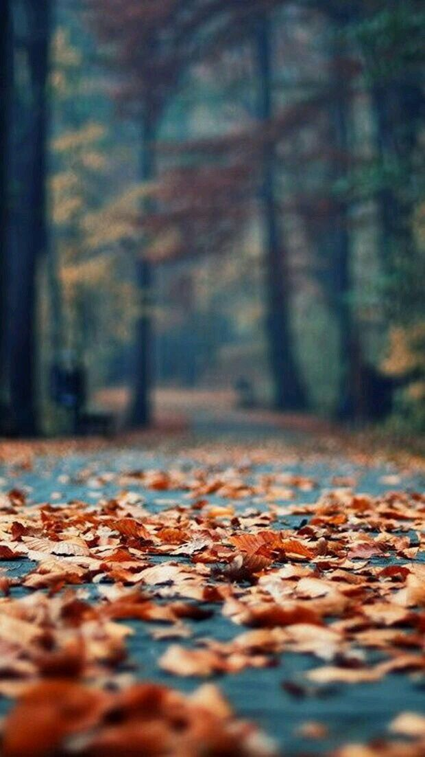 Crispy Autumn Leaves Pictures, Photos, and Images for Facebook, Tumblr, Pinterest, and Twitter