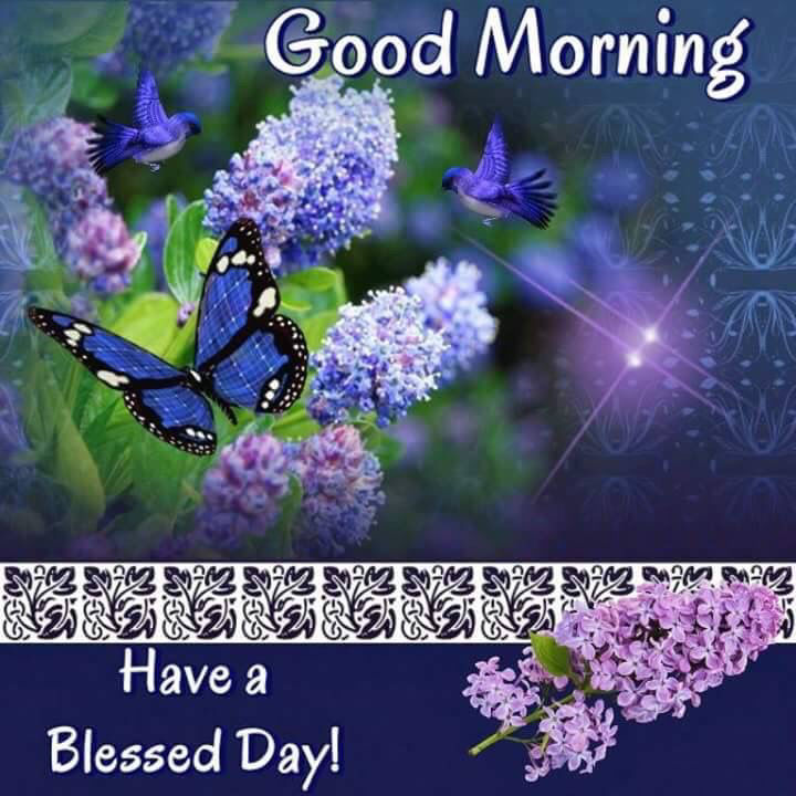 Have A Good Day Honey Quotes: Good Morning, Have A Blessed Day Pictures, Photos, And
