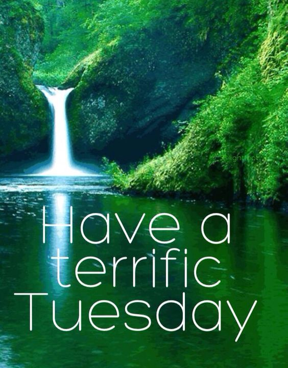 have a terrific tuesday pictures photos and images for