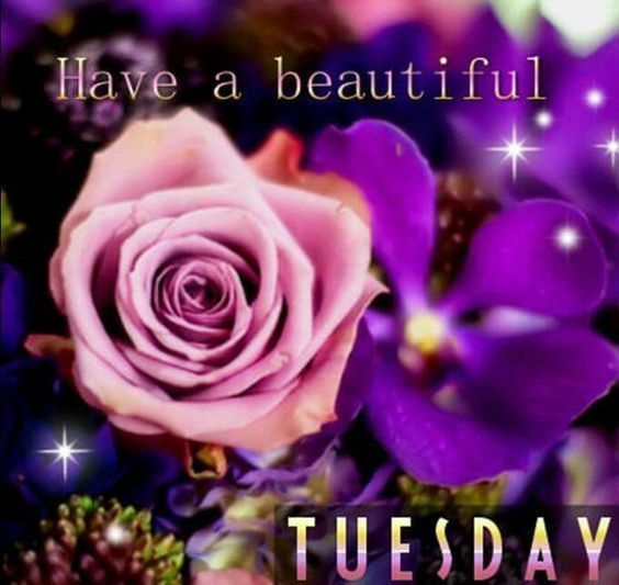 Have A Beautiful Tuesday Pictures, Photos, and Images for Facebook, Tumblr,  Pinterest, and Twitter