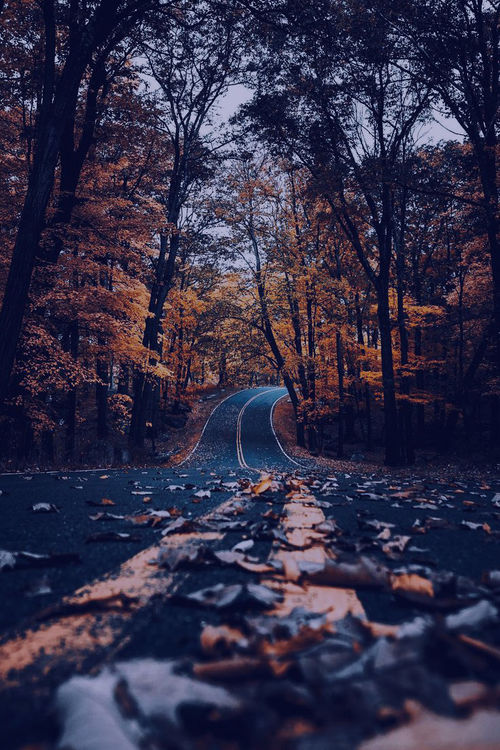 Autumn Road wallpapers Crazy Frankenstein