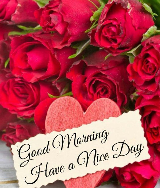 good morning have a nice day pictures photos and images for