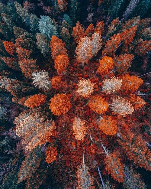 overhead view  forest trees pictures   images