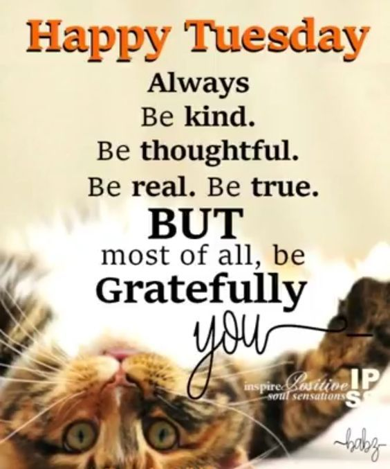 Tuesday Morning Inspirational Quotes: Happy Tuesday, Be Gratefully You Pictures, Photos, And