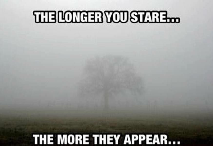 The Longer You Stare The More They Appear Pictures