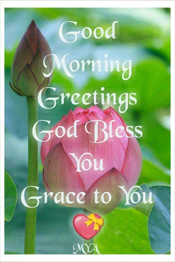Good morning greetings god bless you grace to you pictures photos good morning greetings god bless you grace to you m4hsunfo