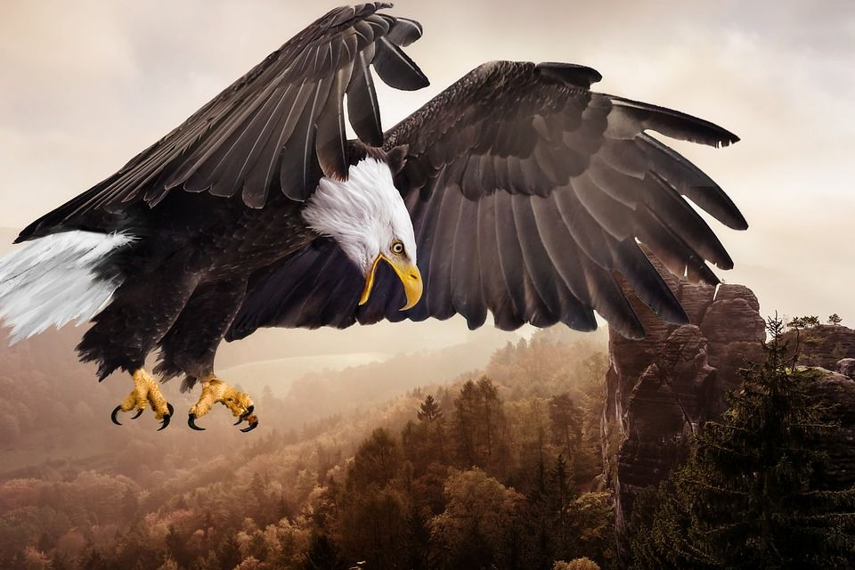 Flying Eagle Pictures Photos And Images For Facebook