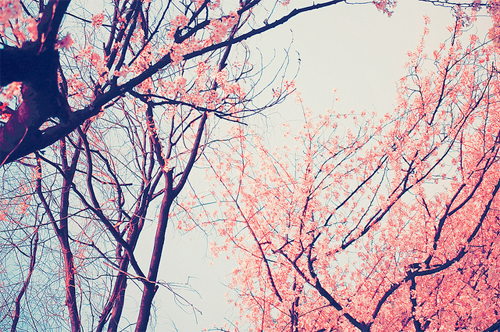 Vintage Tree Flowers Pictures Photos And Images For Facebook