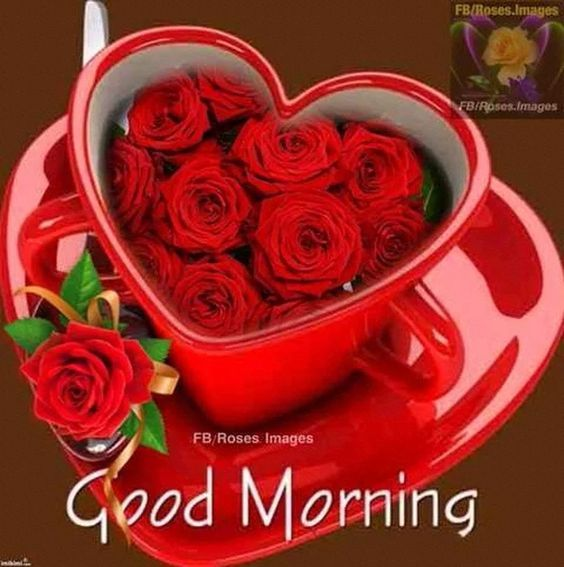 Good Morning Roses In A Mug Pictures Photos And Images