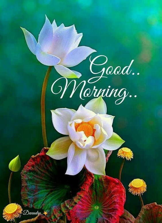 Good Morning Flower Quote Pictures Photos And Images For Facebook