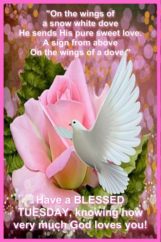 Floral Dove Blessed Tuesday Quote Pictures, Photos, and