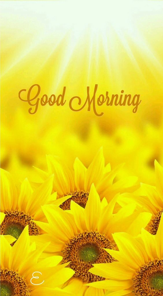 Sunflower Good Morning Quotes Pictures Photos And Images For Interesting Quotes Morning