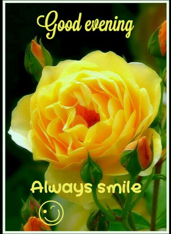 smiling good morning quote pictures photos and images for facebook