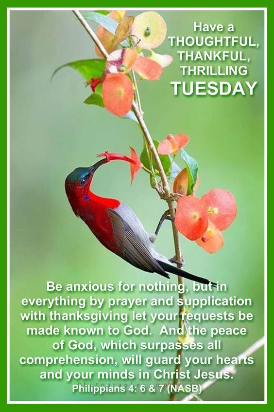 Thoughtful Thankful Thrilling Tuesday Pictures Photos
