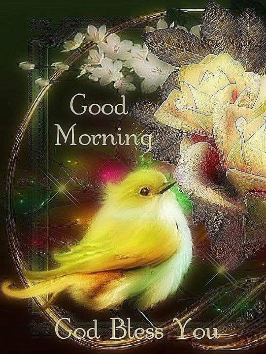 Yellow Bird Yellow Rose Good Morning Blessing Pictures Photos And Images For Facebook Tumblr Pinterest And Twitter