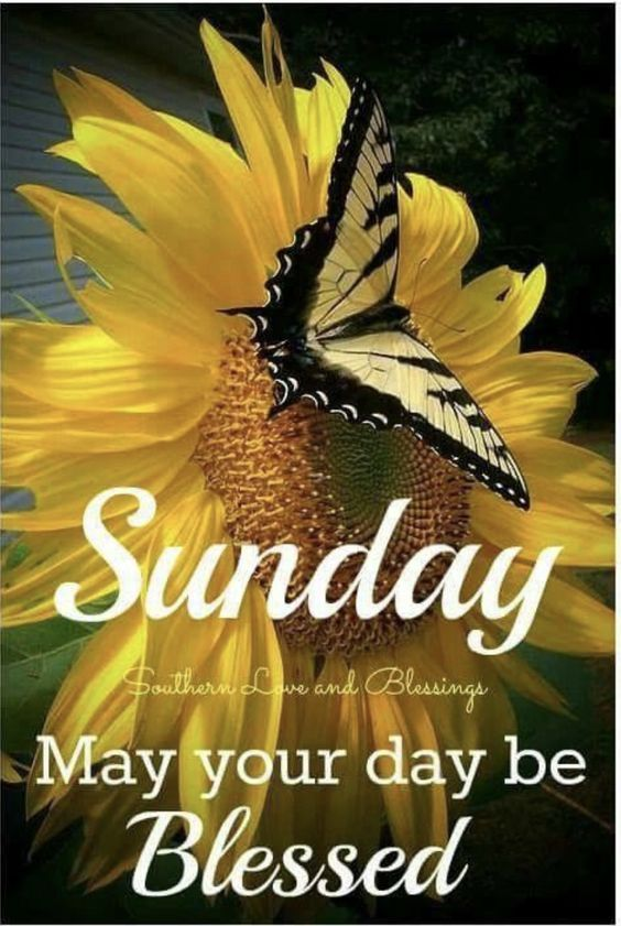 yellow butterfly blessed sunday pictures photos and