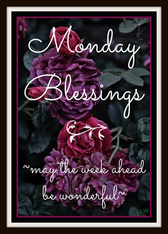 Wonderful Week Ahead, Monday Blessings Pictures, Photos