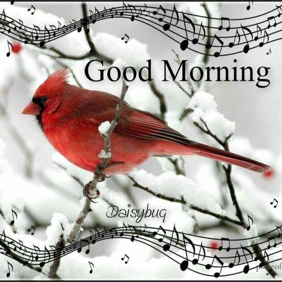 Winter Cardinal Morning Quote Pictures, Photos, And Images