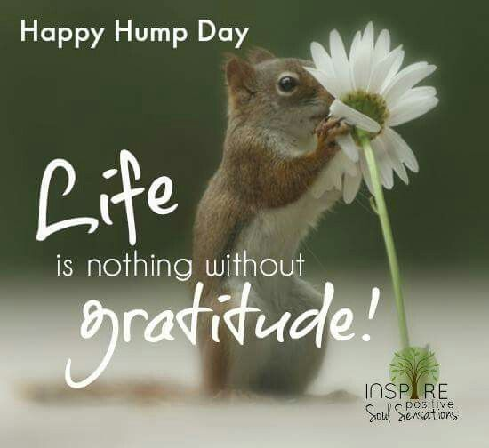 hump day instagram