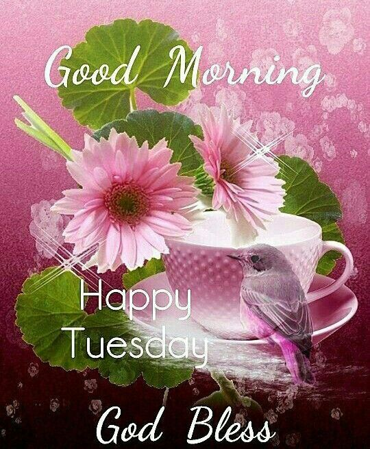 hummingbird tuesday morning graphic pictures photos and images for rh lovethispic com tuesday morning pinterest tuesday morning quotes