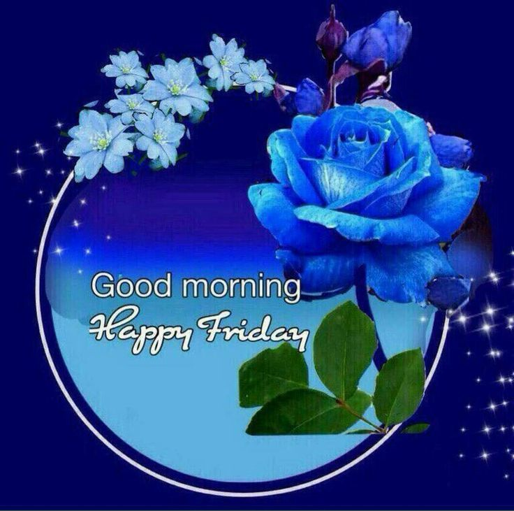 Blue Rose Happy Friday Morning Image Pictures, Photos, and