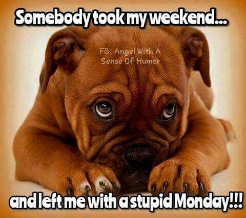 Somebody Took My Weekend And Left Me With A Stupid Monday ...