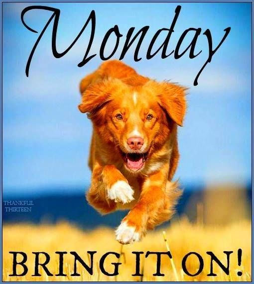 Happy Dog Monday Quote Pictures, Photos, and Images for ...