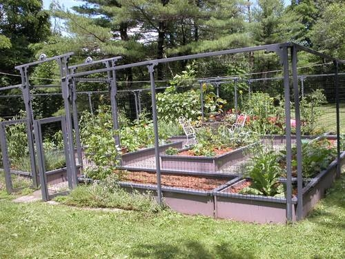 Vegetable Gardening Pictures Photos And Images For