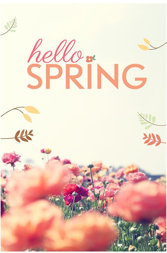 Field of flowers hello spring quote pictures photos and images for facebook tumblr - Happy spring day image quotes ...