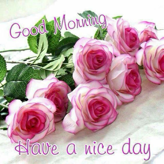 Nice day good morning roses pictures photos and images - Good morning rose image ...